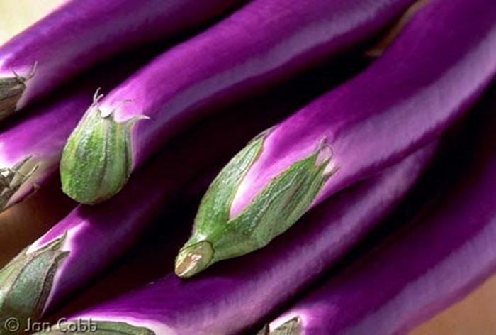 chinese_eggplant_521